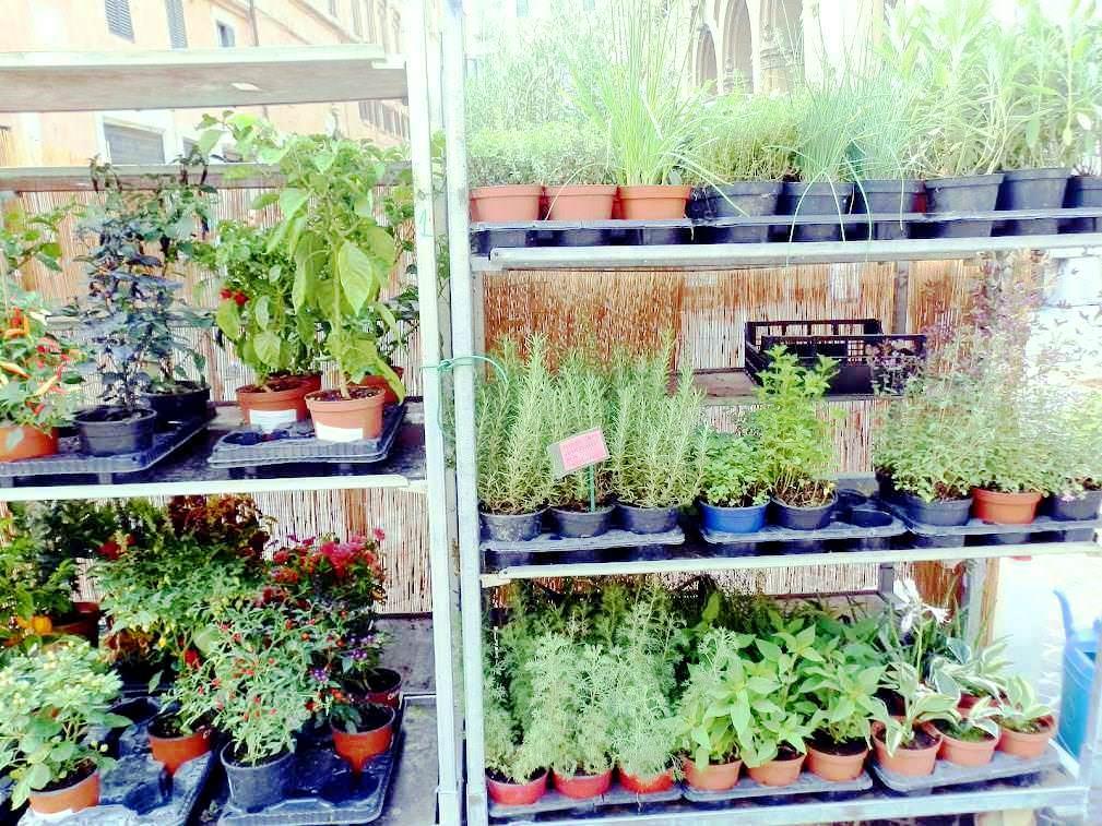 Piante in serra. strutture diverse a secondo dello scopo