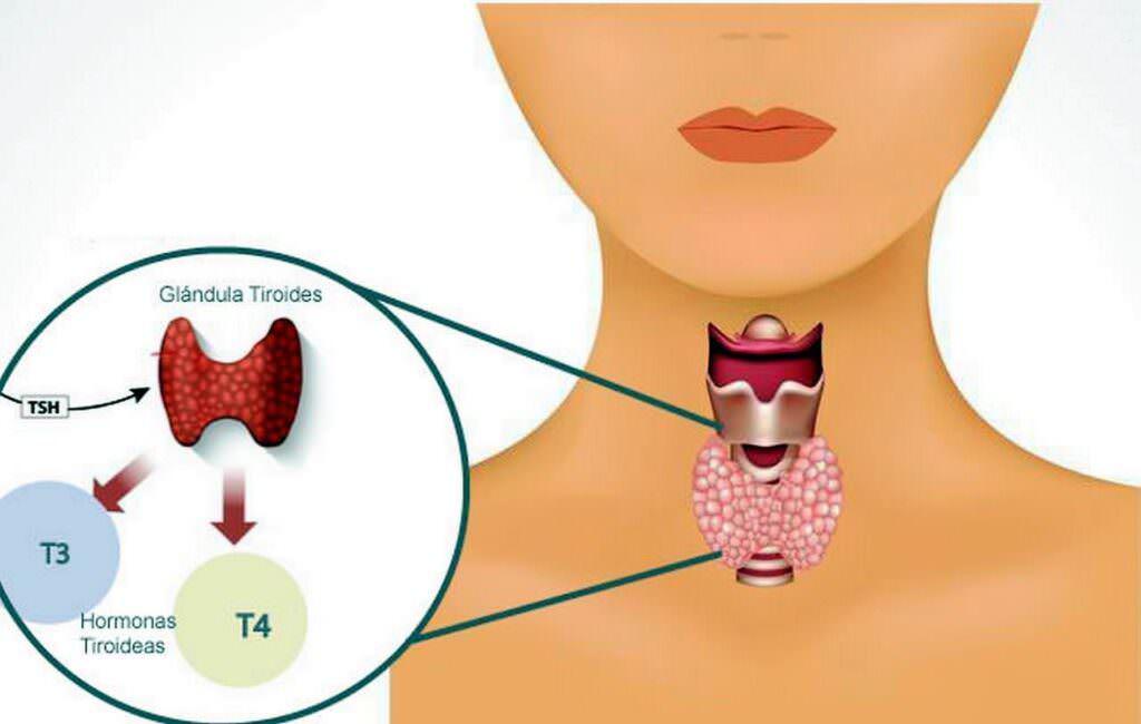 Tiroidite 20-26 maggio 2019 settimana preventiva