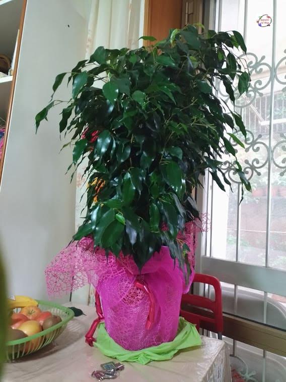 16 Piante e fiori purifica aria in casa