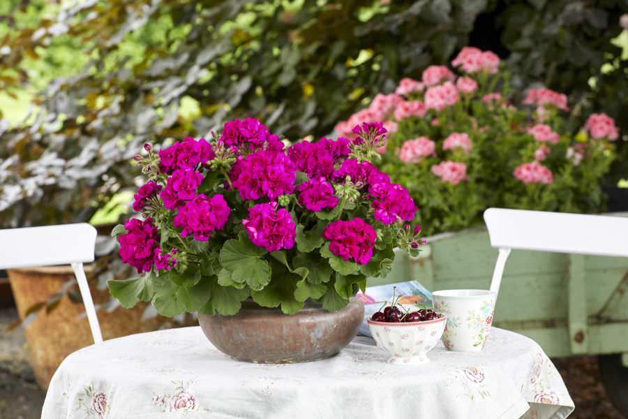 7 Piante in vaso per chi soffre di allergie