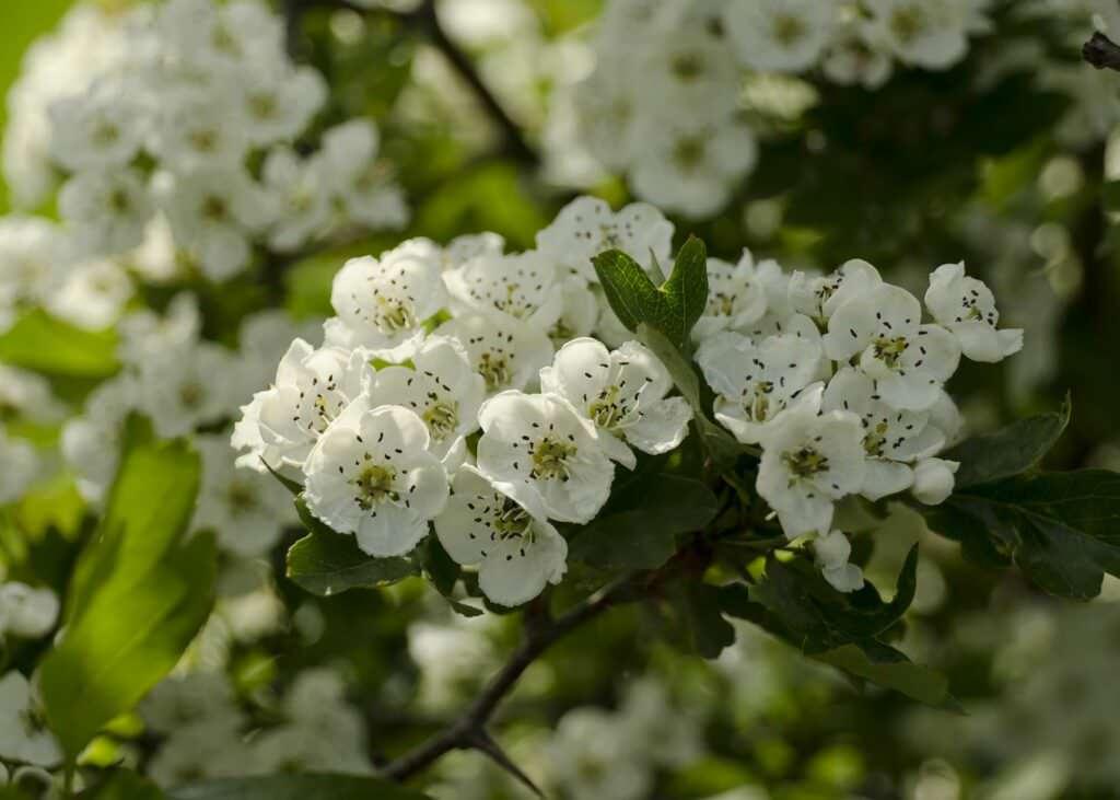 12 piante e fiori zodiaco portafortuna da regalare