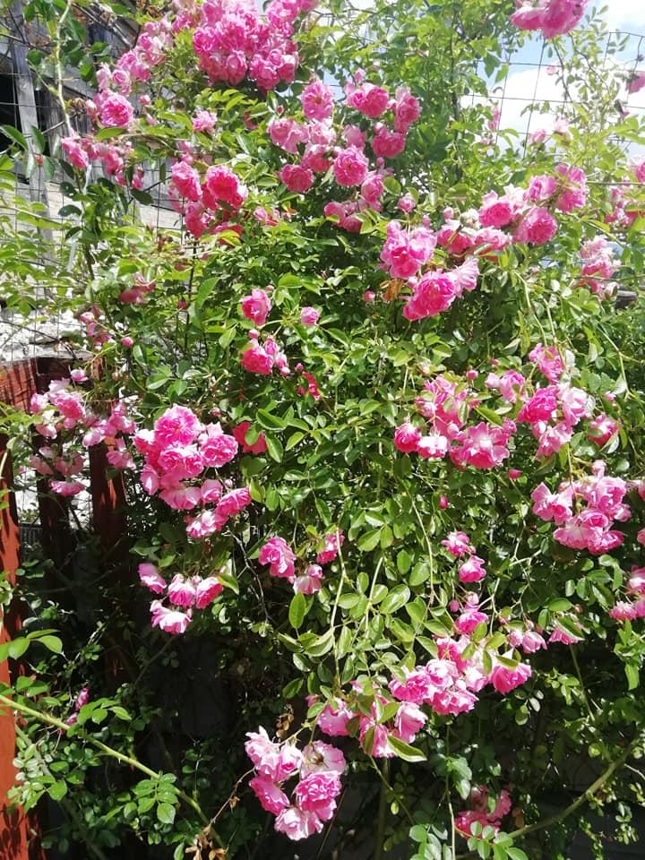 Piante da giardino resistenti al sole