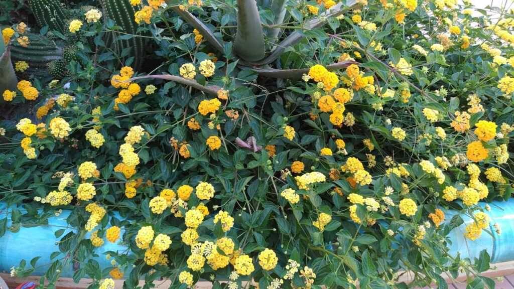 10 piante per fioriere da balcone per abbellire l'esterno!