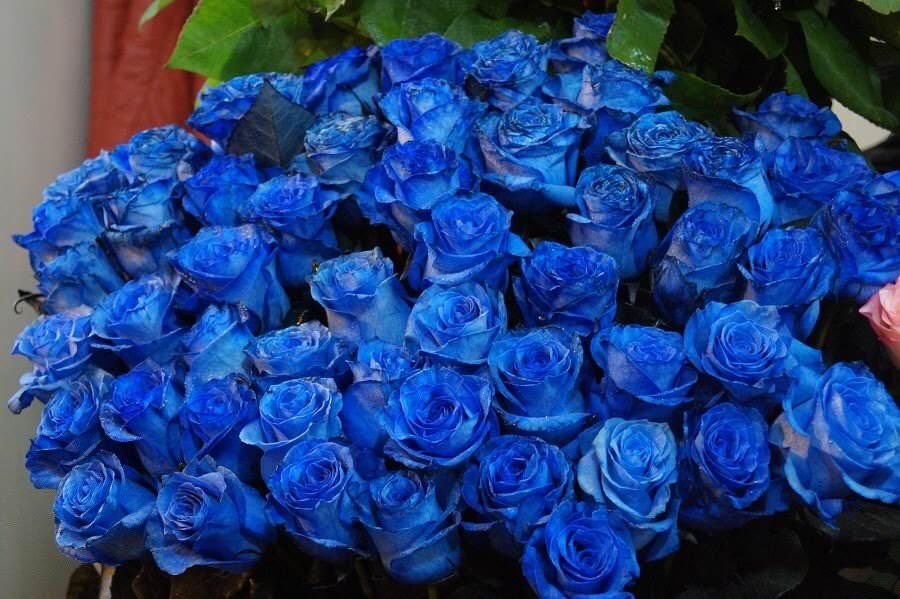 Significato colori rose nelle diverse sfumature 1 fiori