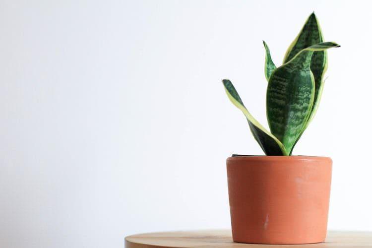 7 potenti piante per eliminare gli odori sgradevoli belle e profumate