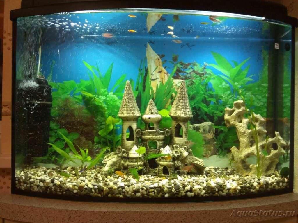 Piante da acquario vere scarsa luce. Come sceglierle?
