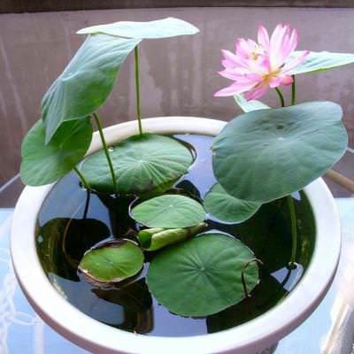 5 tipi di piante idroponiche amanti dell'acqua