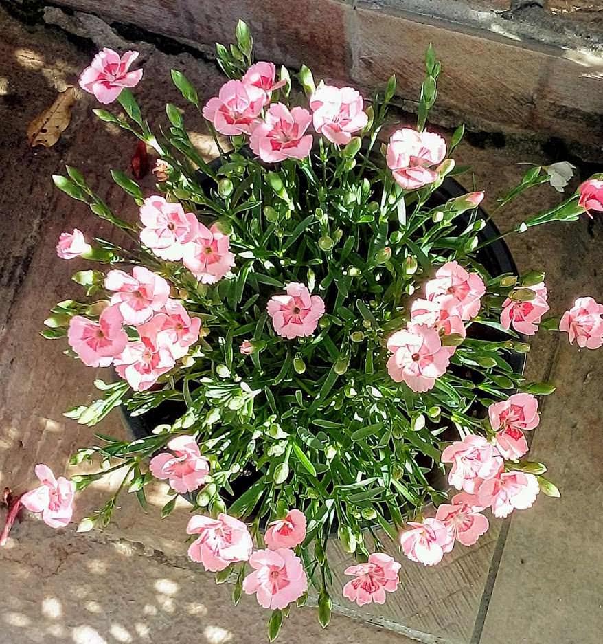 Quali fiori seminare a marzo con semi?