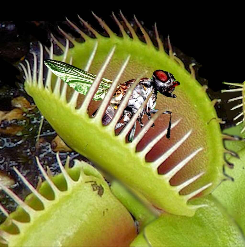 7 piante carnivore che mangiano insetti