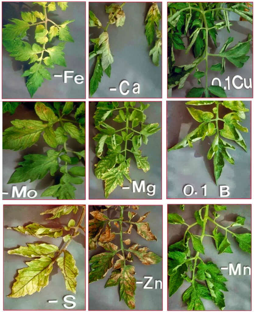 Come riconoscere la carenza di nutrienti nelle piante