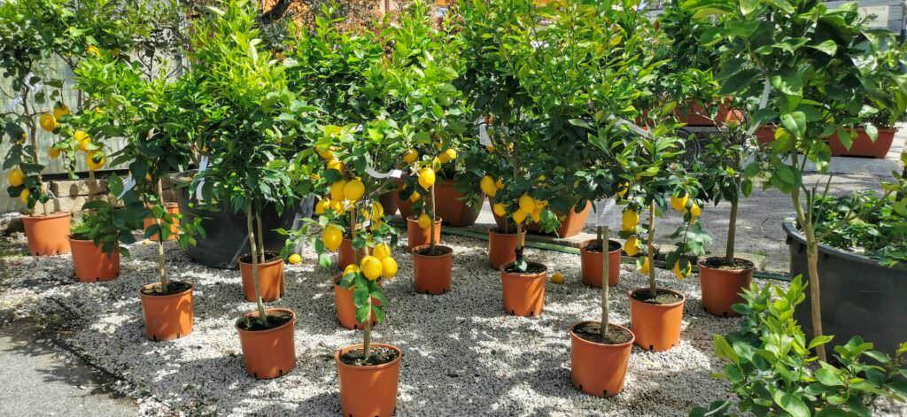 10 Piante di buon augurio feng shui in giardino
